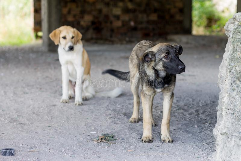 Two stray dogs. Two cute stray dogs, brown and yellow royalty free stock photography