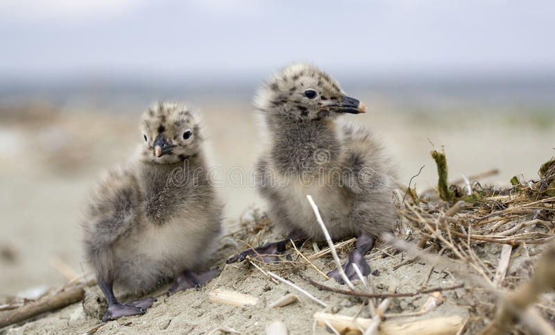 Two Cute Young Birds stock images