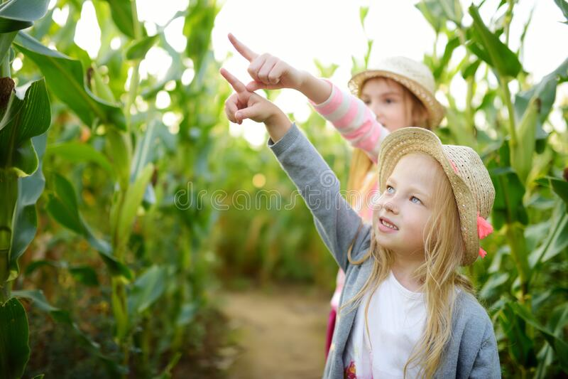 Two cute young girls having fun in a corn maze field during autumn season. Games and entertainment during harvest time. Active family leisure with kids royalty free stock image