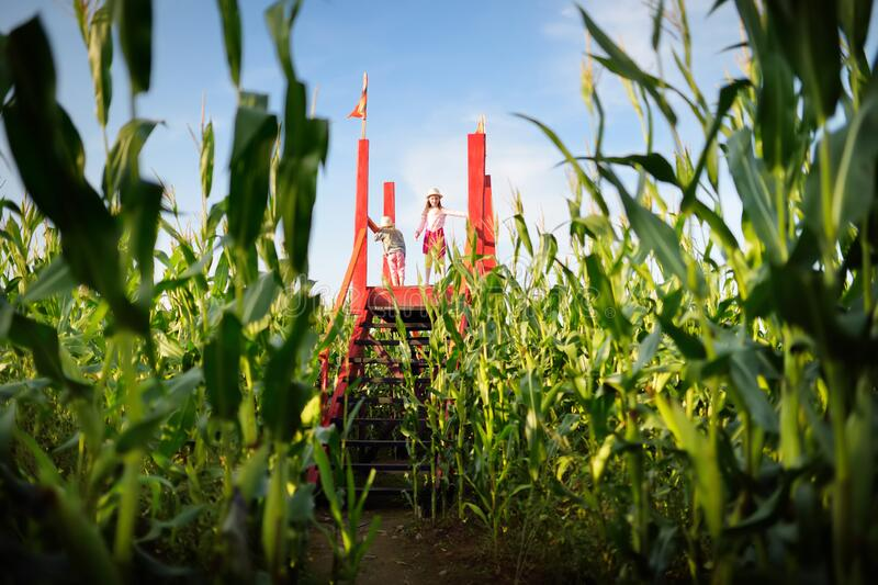 Two cute young girls having fun in a corn maze field during autumn season. Games and entertainment during harvest time. Active family leisure with kids stock image