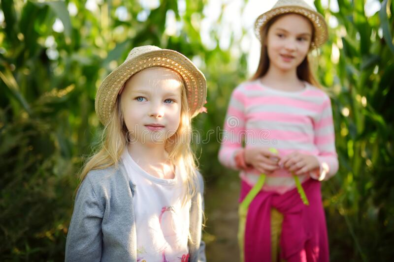 Two cute young girls having fun in a corn maze field during autumn season. Games and entertainment during harvest time. Active family leisure with kids stock photo