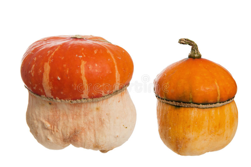 Download Two decorative pumpkins stock photo. Image of holidays - 21494126