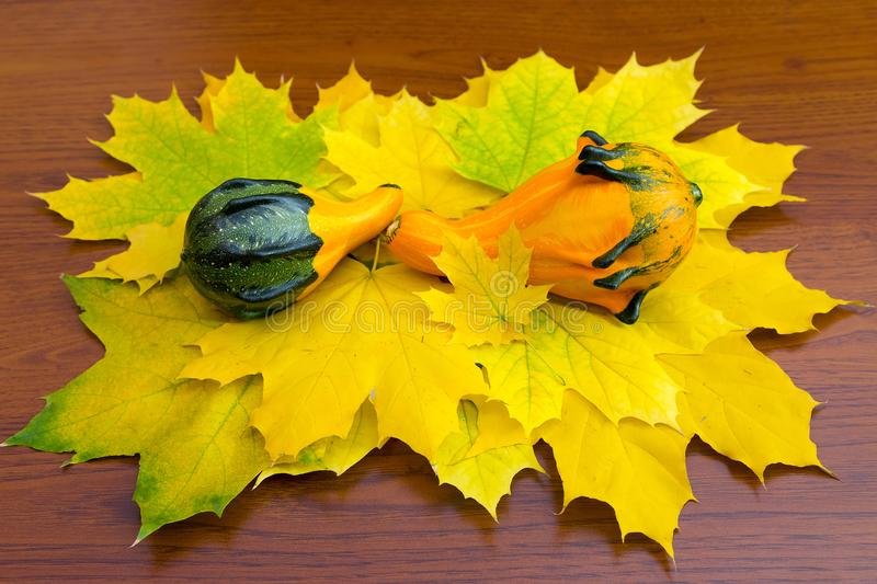 Pumpkins on maple leaves royalty free stock image