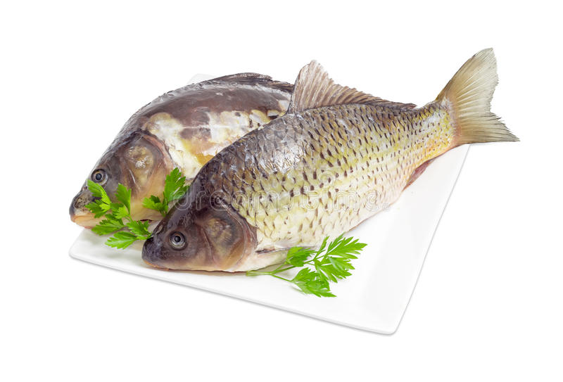 Two different carps prepared for cooking on dish. Common carp and mirror carp with peeled scales and prepared for cooking and parsley twigs on the white square royalty free stock images