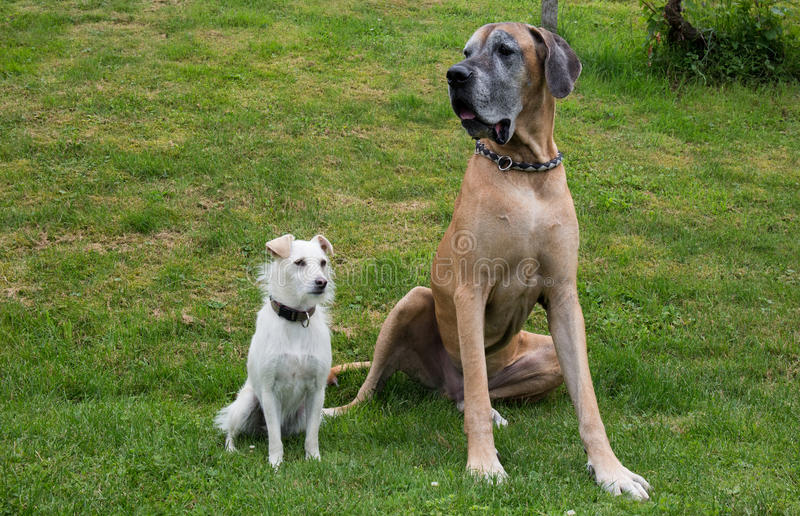 Two different dogs stock photo