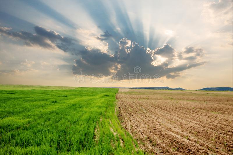 A field in spring time with two parcels of different colors royalty free stock photo