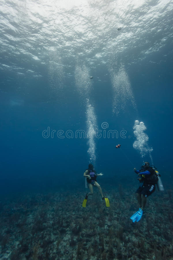 Two divers explore coral reef in Hol Chan Marine r royalty free stock images