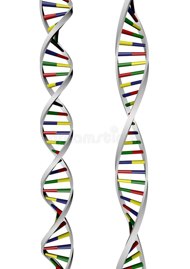 Two DNA Helix royalty free stock image