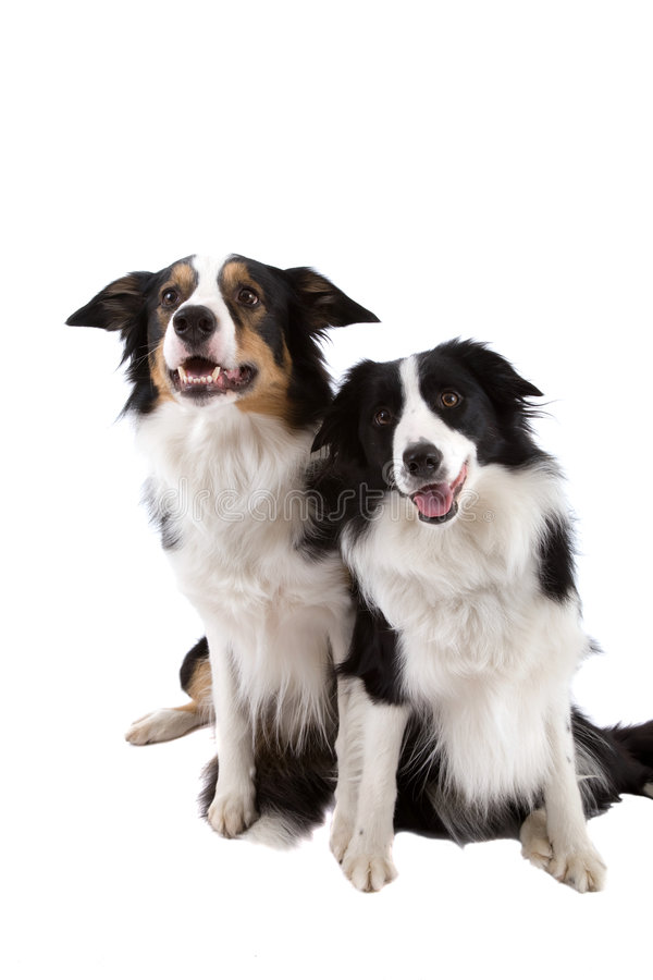Free Two Dogs Royalty Free Stock Images - 3749569