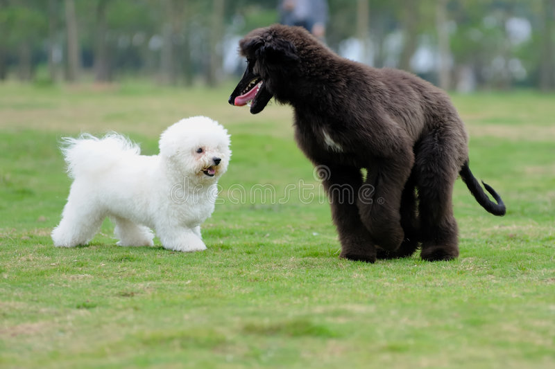 Two dogs royalty free stock images