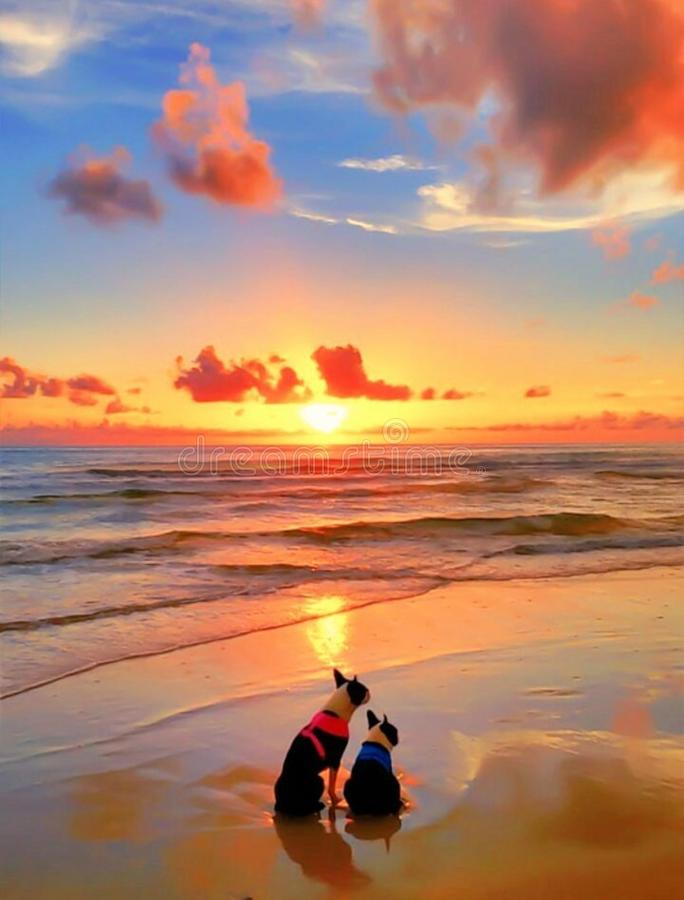 Two dogs on beach at sunset stock photos