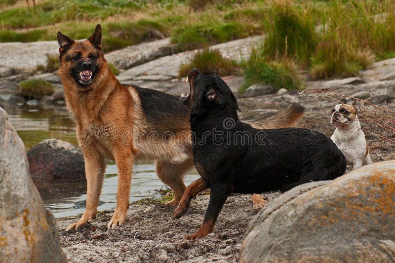 Two dogs bothered by three 3 royalty free stock photo