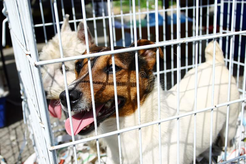 Two dogs in cage royalty free stock photography