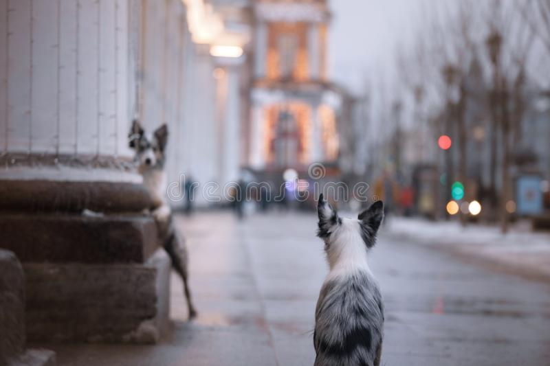 Two dogs in the city , traveling Pets. royalty free stock photography