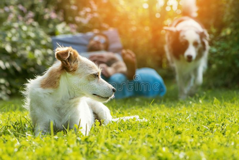 Two dogs in the garden. Man relaxes on a garden lounger and two dogs are in the garden stock photos
