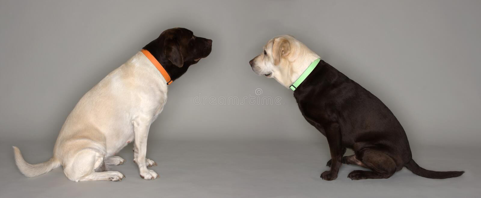 Download Two Dogs, Heads Swapped stock image. Image of cross, furry - 5339199