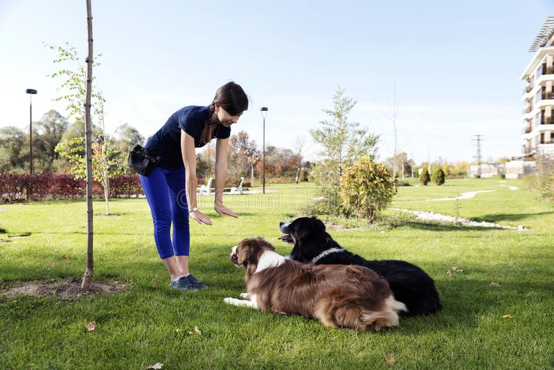 Two Dogs Laying Obey Training Professional Handler royalty free stock images