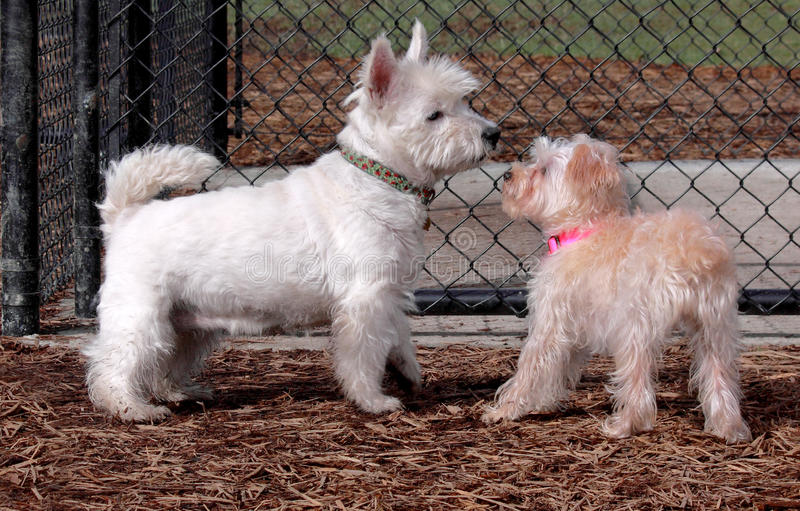 Download Two Dogs Meeting For The First Time Stock Photo - Image: 12562950