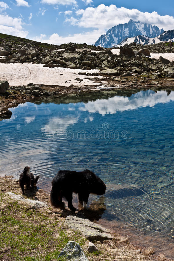 Two Dogs In Mountains. Stock Image