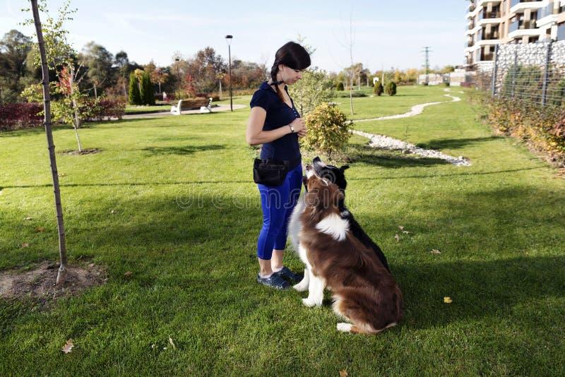 Two Dogs Sitting Training Professional Dog Handler royalty free stock photo