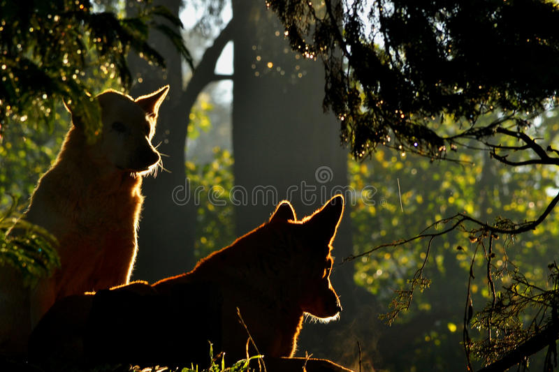 Two Dogs Sitting Under Tree stock photos