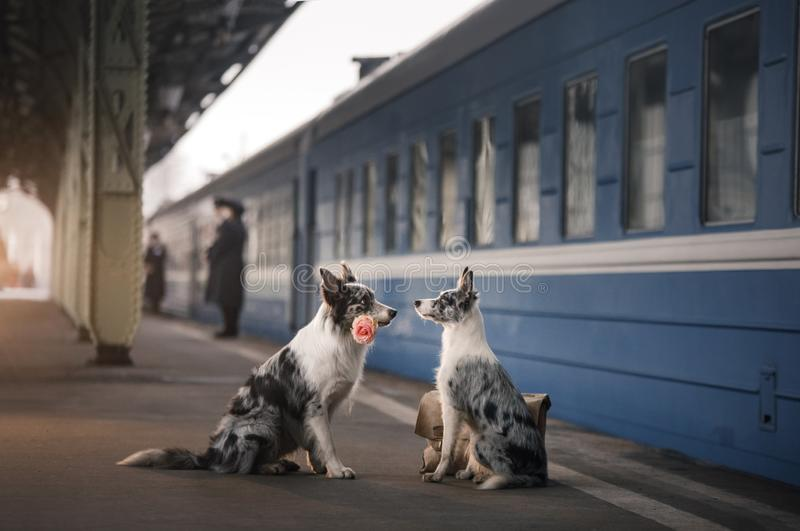 Two dogs together. Meeting at the station. Travelling. With a pet stock images