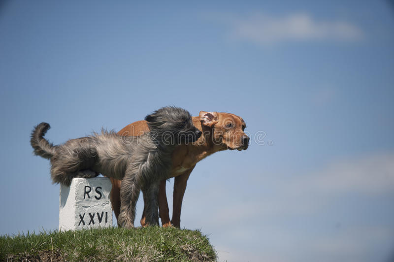 Two dogs on top of the hill stock photography