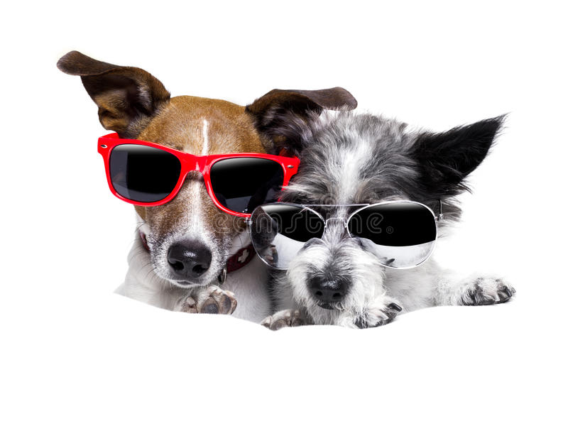 Two dogs very close together stock image
