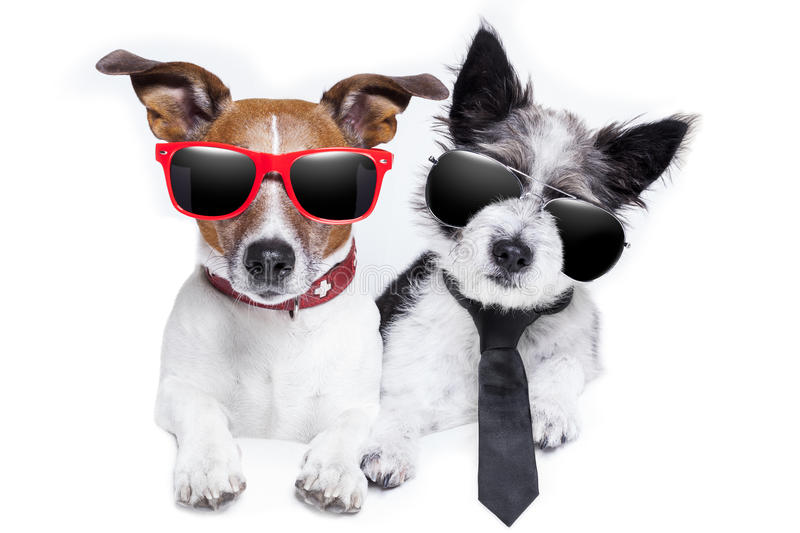 Two dogs very close together stock photo