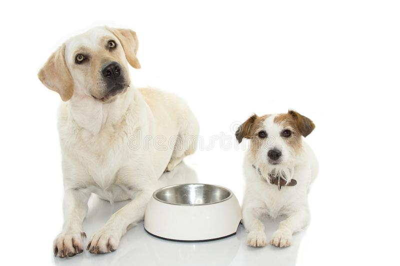 TWO DOGS WAITING FOR EAT WITH ITS EMPTY BOWL FOOD BETTWEEN THEM royalty free stock photography