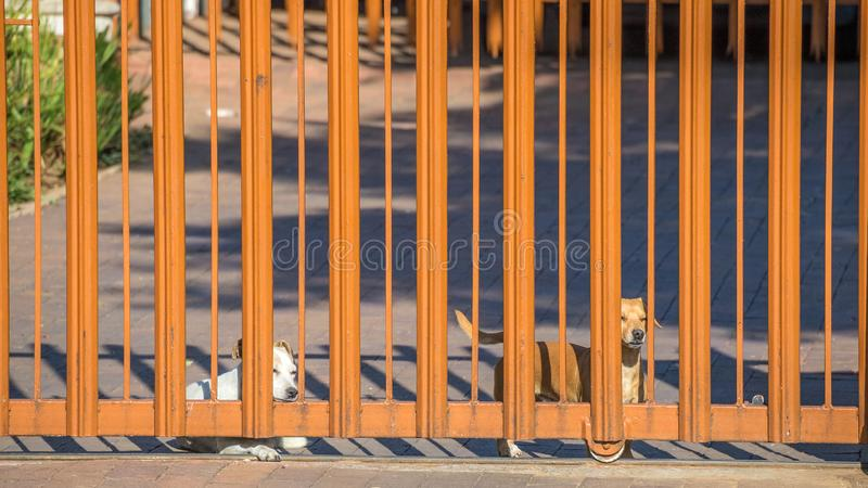 Two dogs waiting at a gate stock images