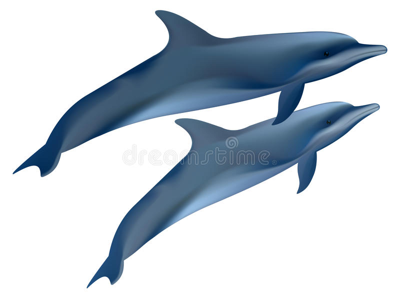Two Dolphins. Stock Photography