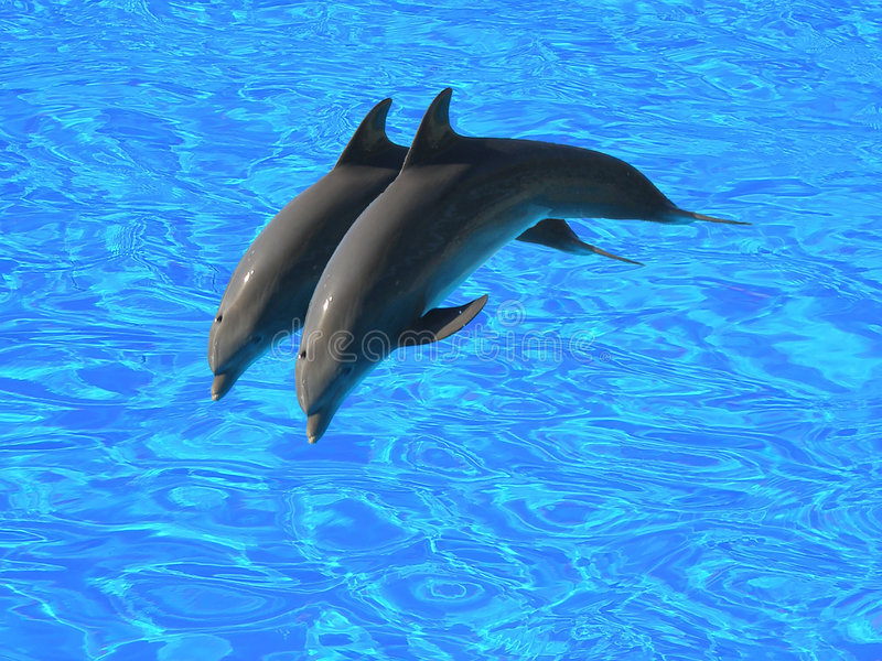 Two dolphins royalty free stock photo