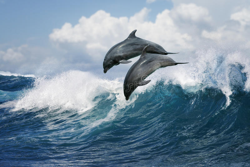 Two dolphins jumping over wave stock photos