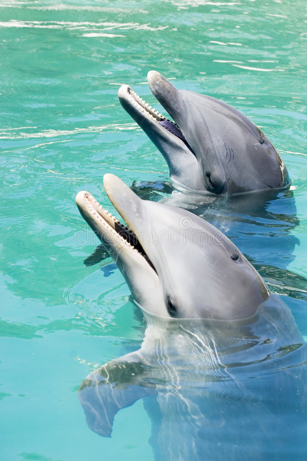 Download Two Dolphins Playing stock photo. Image of time, palm, white - 720932