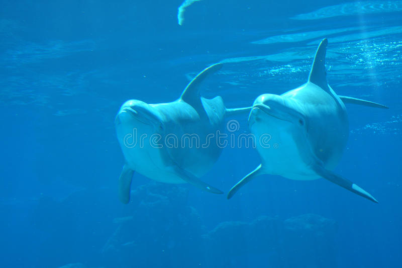 Download Two Dolphins  underwater stock photo. Image of beauty - 9695050