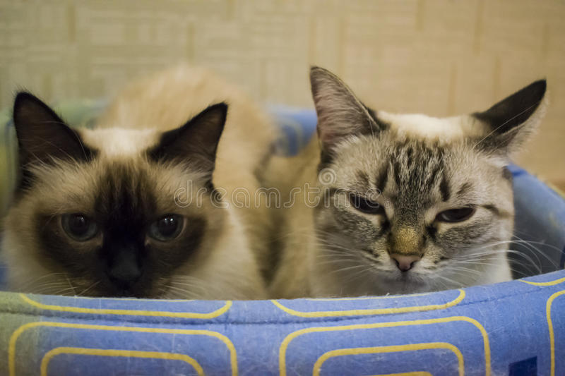 Two domestic cats stock photography