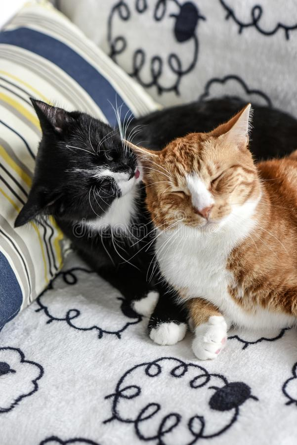 Two domestic cats lying on the couch and hugging. Two domestic cats lying on the couch and hugging royalty free stock photo