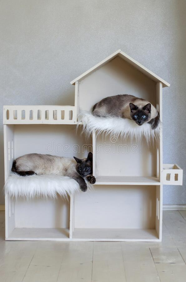 Two Domestic Short Haired Cat Brothers In Cat House Domestic Cat Twins Stock Image Image Of Companionship Helth 180695099