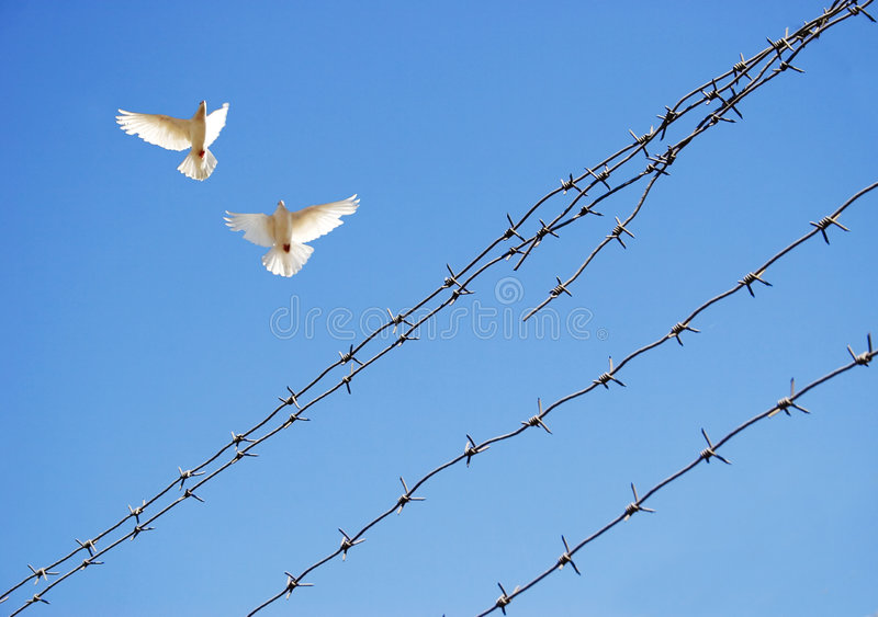 Two doves in sky stock photography