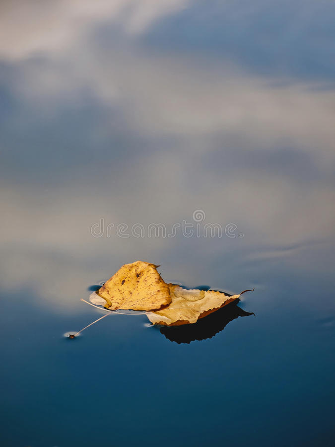 Two dried leaf in water stock photos