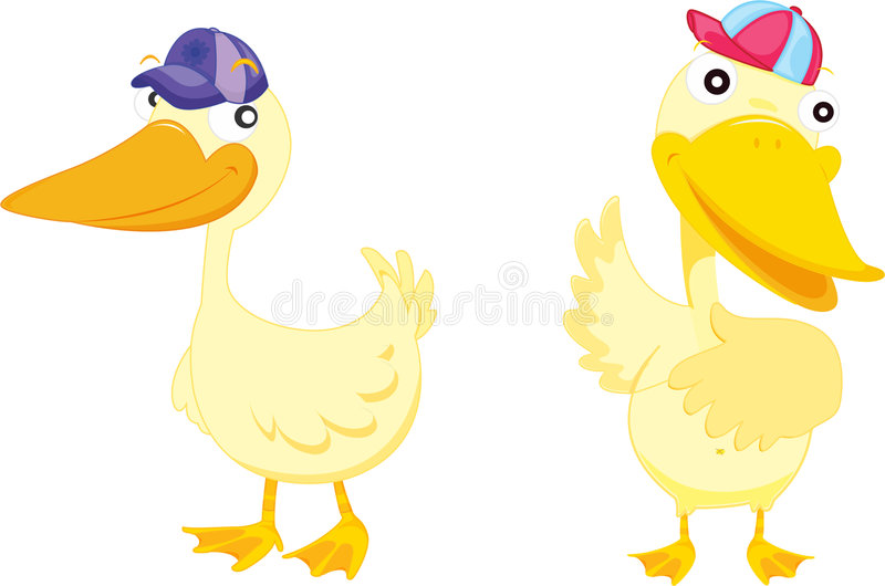 Two Ducks Royalty Free Stock Image
