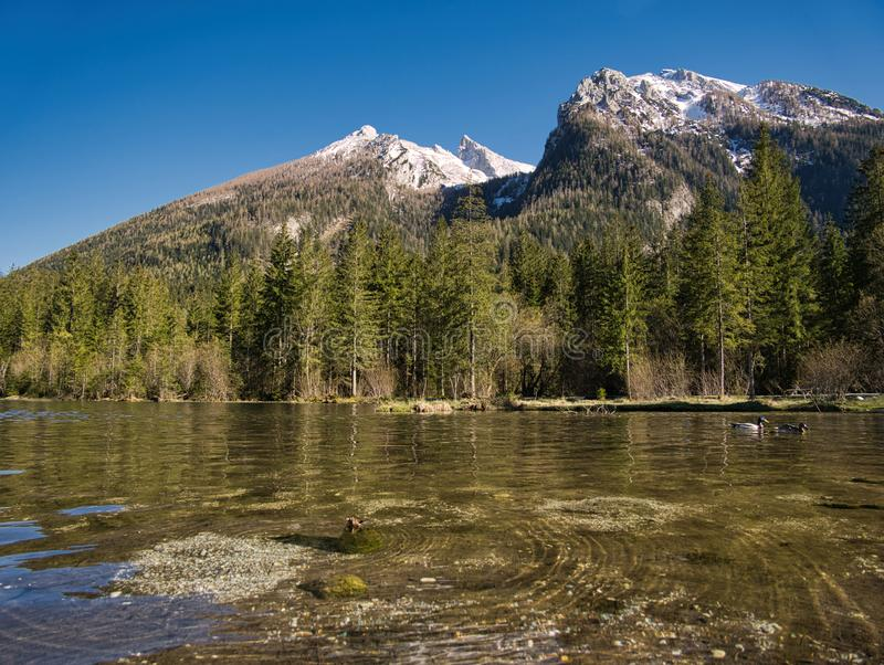 Two ducks on the Hintersee in Berchtesgaden stock photo
