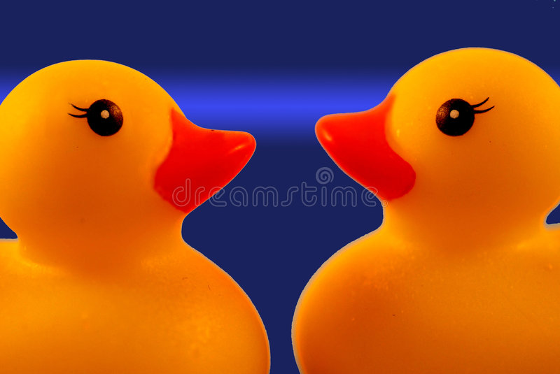 Two ducks looking each other royalty free stock photo