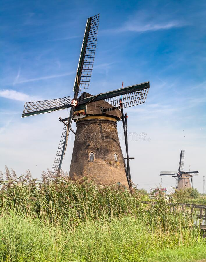 Two dutch windmills standing behind reed royalty free stock photos