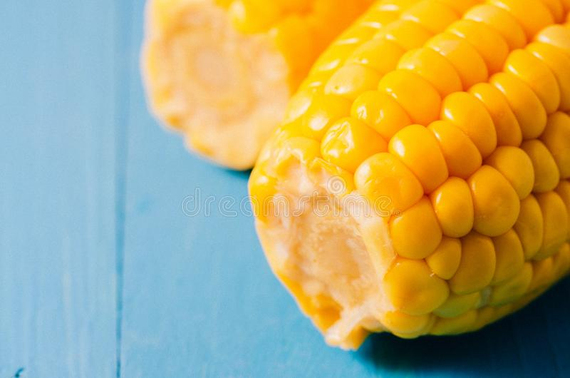 Two ears of boiled appetizing corn on a blue background/Close up. Two ears of boiled appetizing corn on a blue background. Healthy royalty free stock images