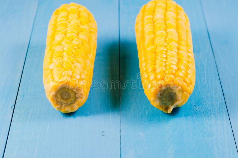 Two ears of boiled appetizing corn on a blue background/two ears of boiled appetizing corn on a blue background. Healthy food. stock images