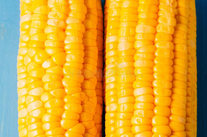 Two ears of boiled appetizing corn on a blue table/vegetarian concept. Close up. Two ears of boiled appetizing corn on a blue stock photo