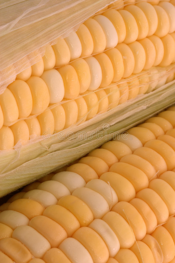 Download Two Ears of Corn - Closeup stock image. Image of white - 191861