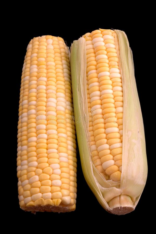 Two Ears Of Corn Over Black Stock Photo